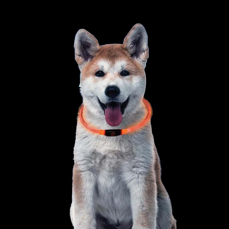Premium Halsband Leuchtschlauch Leuchthalsband Hundehalsband Blinklicht Orange